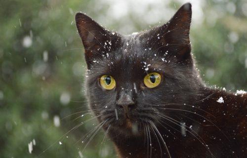 Kass William: Digikommunikatsiooni spetsialist
